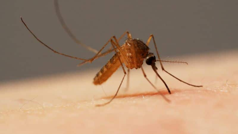 A Smartphone that can repel mosquitoes