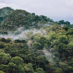 Globe encourages rainforestation to combat adverse effects of natural hazards and climate change